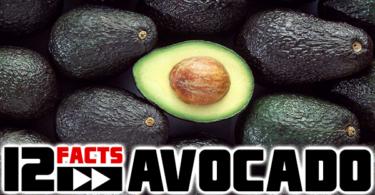 avocado-interesting-facts