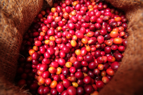 Coffee Beans Are Actually Red