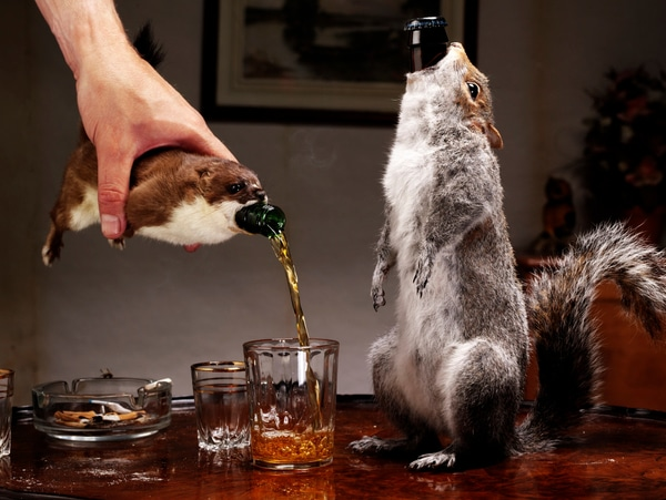 Carcass Beer